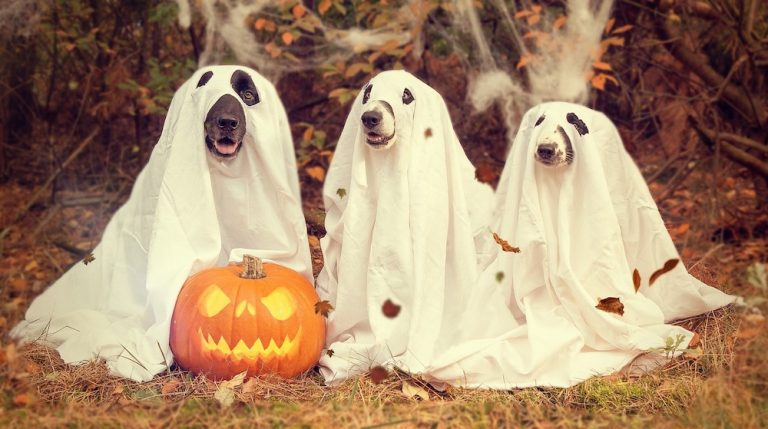 Halloween Safety Tips - Hoffmann Brothers